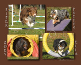 Fitzpatrick 8x10 - All Four Dogs