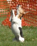 Oh Lord, Dear Big Dog, let my handler stay out of my way so I can run clean!