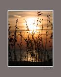 Sunset-at-the-Sandbar.jpg