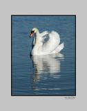 Lakeland Swan