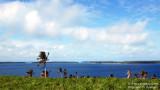 Islands of Vava'u Group, Tonga