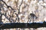Finch in Ice