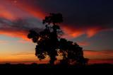 Missouri Sunset Tree Closeup