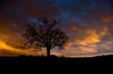 Elam Bend Rainbow Tree Revisited