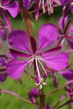 Wildflowers of Wisconsin & Minnesota
