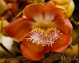 Flowers (horizontal)
