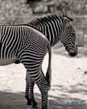Black & Whites