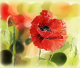 Poppy in Painter, ArtRage and Photoshop