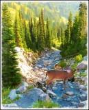 Deer in a Mountain Stream