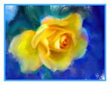 Kathy's Yellow Rose