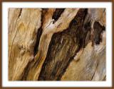 Dead Wood Standing