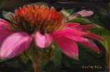 from Linda's garden