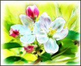 The Blossoms Watercolor