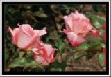 Rose Painting.jpg