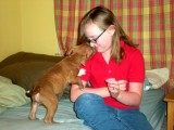 Karen and Zoey's new pit bull puppy, Loki.