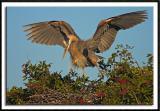 Excitable Great Blue Heron