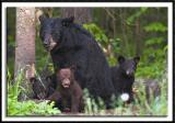 Momma, Cubs, and Mosquitos!!