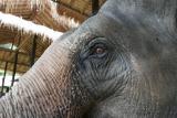 Elephant Eye33502.jpg