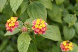 Mountain Flower.jpg