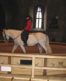 A horse show (dressage demonstration)
