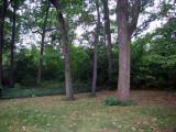 The back yard