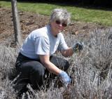 Jerilyn, one of >700 volunteers