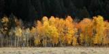 fall in Jackson Hole area