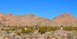 Desert landscape at Joshua Tree NP