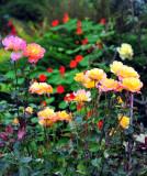 Rods garden