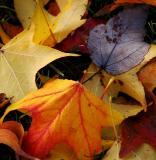 closeup colorful leaves