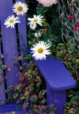 flowers and blue chair
