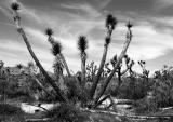 cactus fingers