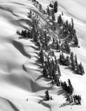 snow drift around trees