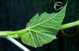 full of life on leaf
