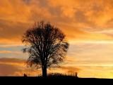dark tree against sunset