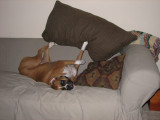 Tearing up the couch