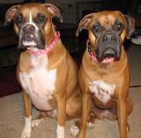 Look at our Valentine Collars