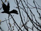 Bird watching today