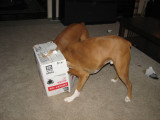 Dogs in a Box!