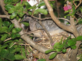 The Baby Bird