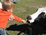 Bubbie feeding his cow