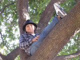 Cool Kid in a Tree