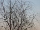I really like this tree - 31 Jan. 2008