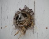 Bird's Nest 3 Feb. 2008
