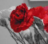 V's Flowers 4 Feb. 2008