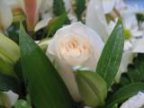 Happy V Day 14 Feb. 2008