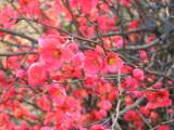 It Finally Bloomed 19 FEb. 2008