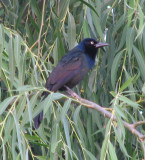 Loud Ass Birds 28 May 2008
