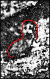 1--1929: Bearded Man discovery, 1/3 inches Length