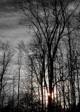 Tree Poetry